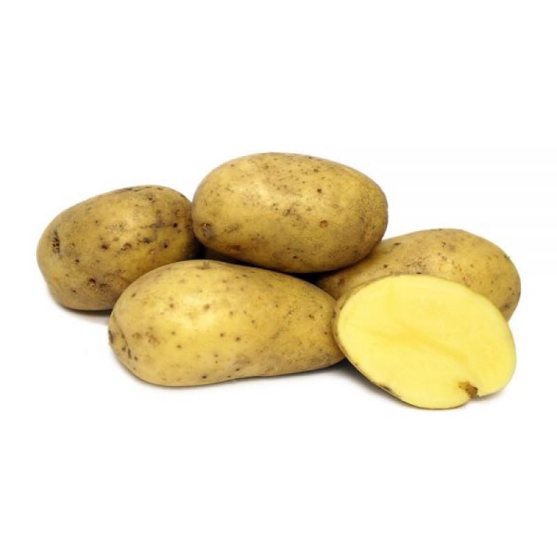 Жолт компир кгр